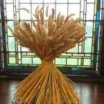 Wheat Sheaf 2013